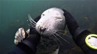 犯規可愛!俏皮海豹只想要被抓肚肚!《國家地理》雜誌