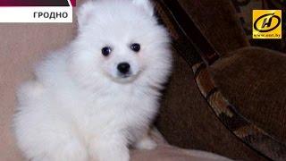 Мошенники по продаже домашних животных из Камеруна появились в Беларуси