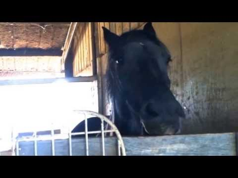 "Knight Shade ""THE TALKING HORSE"" - US National Anthem"