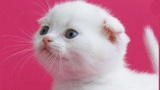 Маленький смешной котенок Кума Приколы с кошками 2016