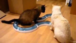 CATIT PLAY CIRCUIT - интерактивная игрушка для кошек