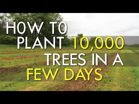 How To Plant 10,000 Trees
