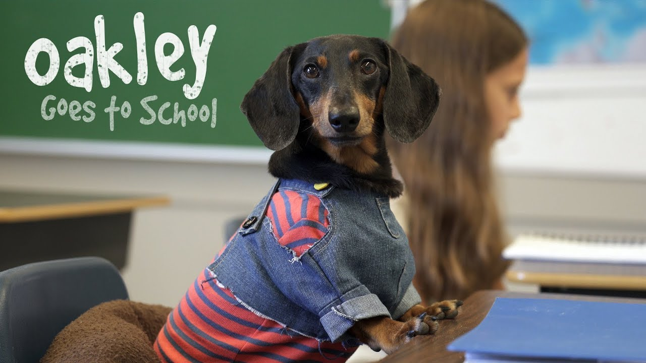 Ep 10 Oakley Goes To School Cute Dog Video School Day Youtube