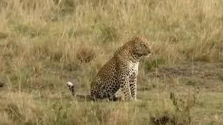 WOW Niesamowite Ataki zwierząt musisz to zobaczyć