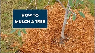How to Mulch a Tree - audio described