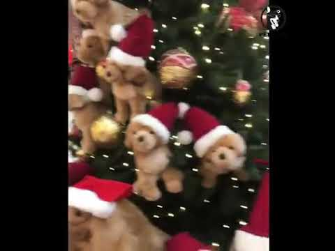 Happy Christmas By Dogs And Cute Puppies