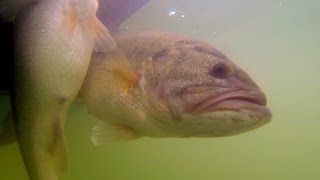 Chickamauga Toads - GoPro Hero 3 Bass Fishing - David Heptinstall