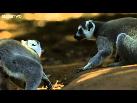 Love Is In The Air - Madagascar, Land of Heat and Dust, Preview - BBC Two