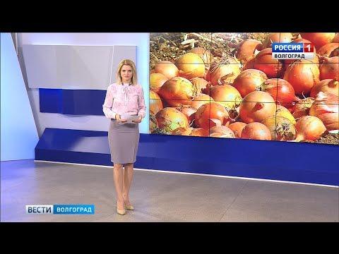 Вести-Волгоград. Выпуск 13.09.19 (17:00)