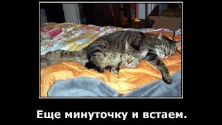 Веселые картинки.  Демотиваторы коты смешные. Приколы про котов.