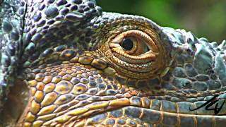Repeat youtube video Sony 1080i HD close-ups & Macros - Nature Unleashed -