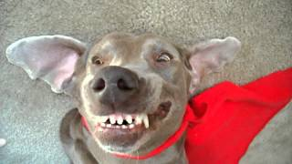 Watch this and try not to laugh at my evil laughing dog