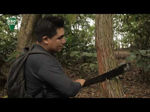 ORO VERDE - CAT´S CLAW (UÑA DE GATO) VILCACORA