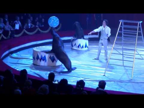 Vasily Timchenko (Russia) Sea Lions - 16th International Circus Festival City of Latina