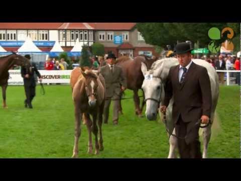 Dublin Horse Show - Aga Khan - 2012