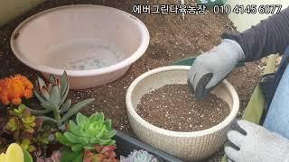 에버그린다육농장 감사의달 다육화분 선물세트 010 41…