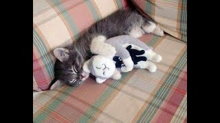 PROOF THAT CATS ARE THE BEST!!!  Cats That Like Hugs Compilation