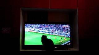 смешное видео кошка смотрит телевизор