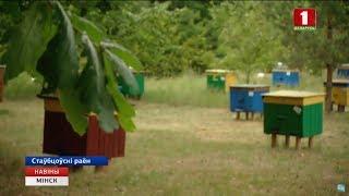 У Мінській області розпочався збір меду