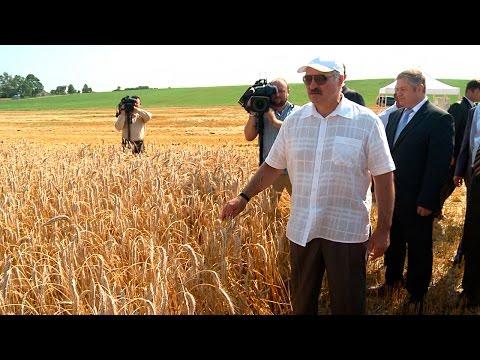 """Лукашенко посетил зерновое поле, принадлежащее ОАО """"1-я Минская птицефабрика"""""""