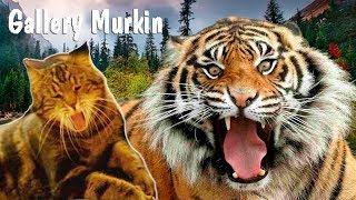 🔴Царь кошек открывает секреты своей жизни!✔️Дикий Тигр!  Tiger animal🐆👍🐯