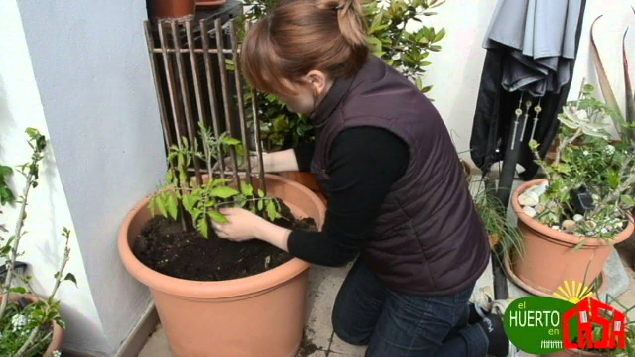 El huerto en casa 24 cultivando tomates youtube for Jardin que planter en janvier
