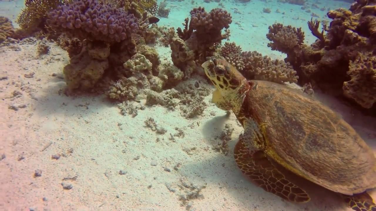 Schildkröte spielt Verstecken - YouTube