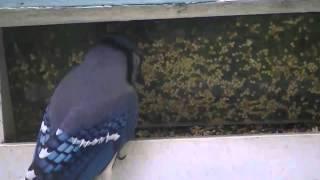 Bird Feeder 5-12-12-001- Gary Clardy