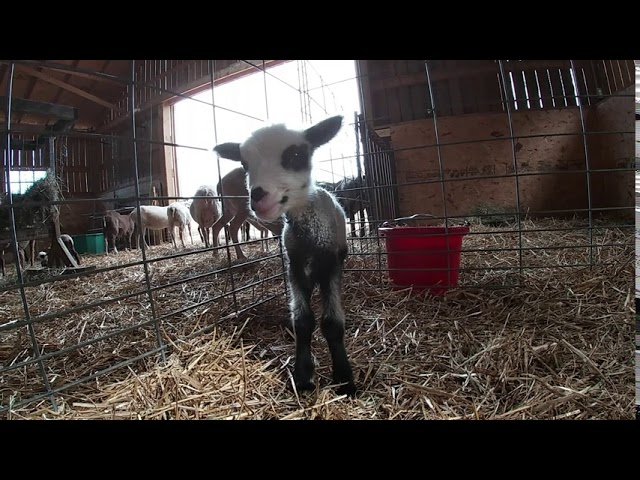 Cedar View Farm  Shenandoah Valley Fiber Festival Welcome Video