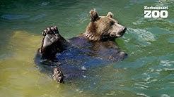 Korkeasaaren karhuille helpotusta helteeseen