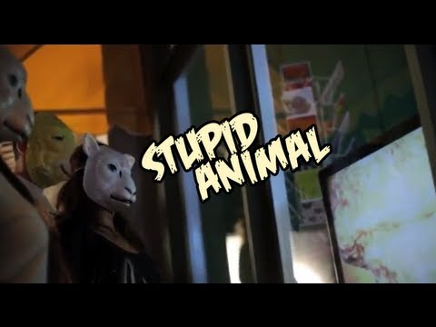 Stupid Animal