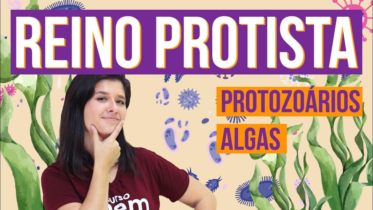 REINO PROTISTA E SUAS CARACTERÍSTICAS | Resumo de Biologia para o Enem