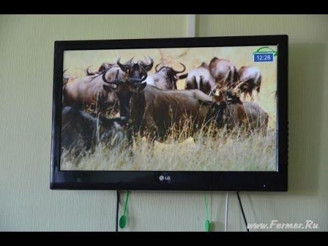 корова и фото бык
