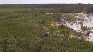 Osprey Looking Out Over Tropical Ocean **Drone Footage**