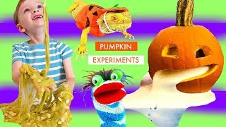 Fizzy Makes Pumpkin Slime and Oozing Experiment for the Pumpkin Lizard