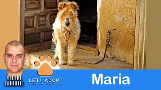 Hope For Paws Rescue Maria Chained To Garage Her Whole Life
