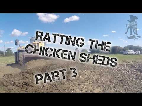 Ratting the chicken sheds part 3