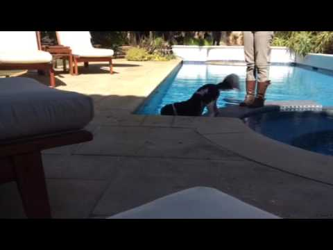 Palmer Retrieves the Ball from the Pool