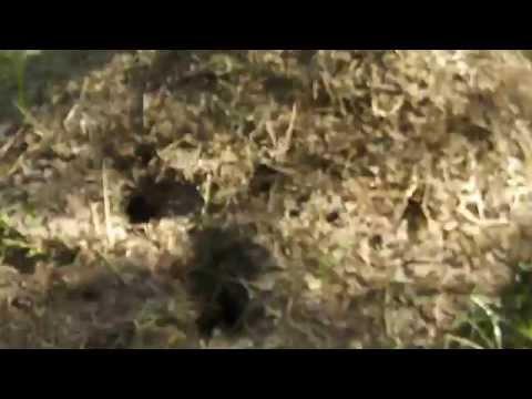 Торт лесной муравейник