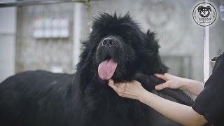 Груминг большой собаки