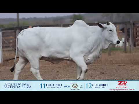 LOTE 229 1