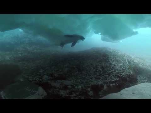 360º: O Incrível Mergulho Debaixo De Um Iceberg Na Antártida