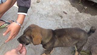 #661 | Thức Ăn Cнo Chó Con Mau Lớn