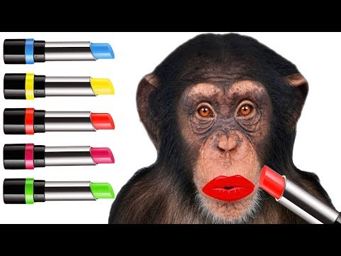 Funny Baby Learn Colors with Monkey & Lipstick Finger Family Nursery Rhymes, Children song