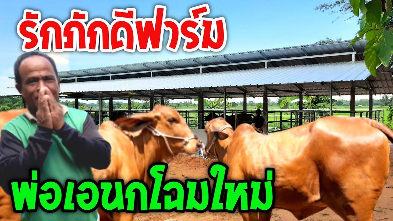 """ชมฟาร์มวัวพ่อเอนก""""รักภักดีฟาร์ม""""กับคอกโฉมใหม่ได้มาตรฐาน มีวัวสวยๆมาแบ่งพี่น้องคือเก่า"""