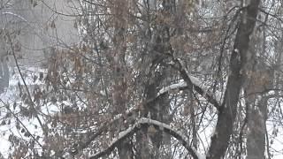 Download Такого снегопада давно не помнят здешние места.... Mp3 and Videos