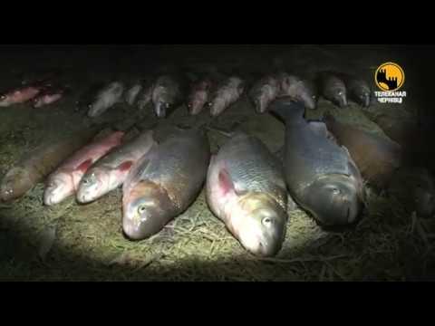 Телеканал ЧЕРНІВЦІ: Чернівецький репортер повернувся з сумісного рейду разом з Чернівецьким рибоохоронним патрулем