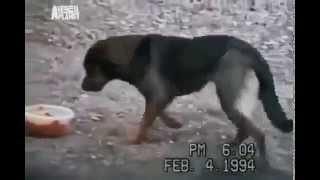 смешные собаки новое класное видео