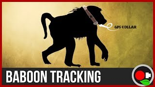 How to Track a Baboon!