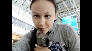 Как перевезти кота в Канаду: прививки, документы, тонктости перелета